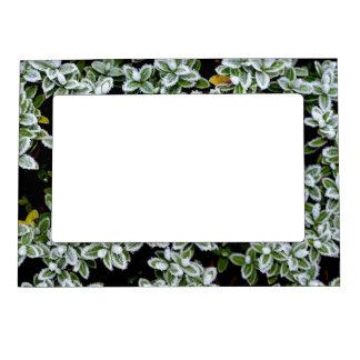 Frozen Winter Plants Magnetic Frame