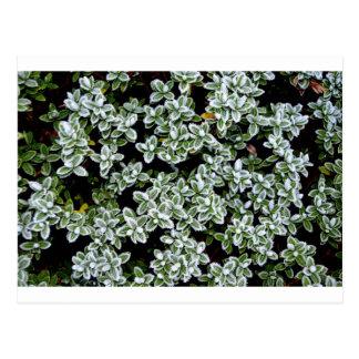 Frozen Winter Plants Postcard