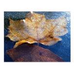Frozen Yellow Maple Leaf Autumn Nature Postcard