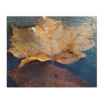 Frozen Yellow Maple Leaf Autumn Nature Wood Wall Art