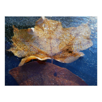 Frozen Yellow Maple Leaf Photography Print
