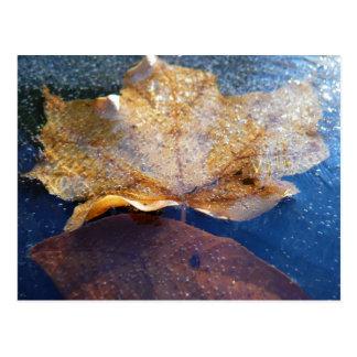 Frozen Yellow Maple Leaf Postcard