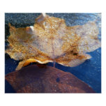 Frozen Yellow Maple Leaf Poster
