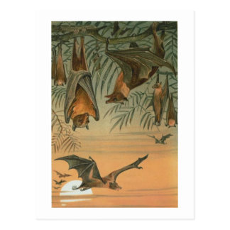 Fruit Bats Post Card