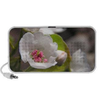 Fruit Blossom Doodle Speaker