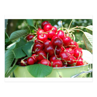 Fruit Cherries Sweet Dessert Destiny Gifts Post Card