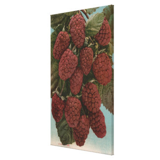 Fruit Chromo Lithograph of LoganberriesState Canvas Print
