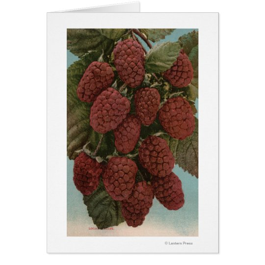 Fruit Chromo Lithograph of LoganberriesState Card