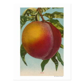 Fruit Chromo Lithograph of PeachFruitState Postcard