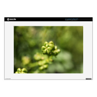 """Fruit of a common rue (Ruta graveolens) Decal For 15"""" Laptop"""