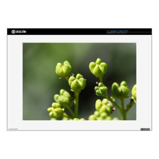 Fruit of a common rue (Ruta graveolens) Decal For Laptop