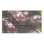 Fruit of eggplants business cards
