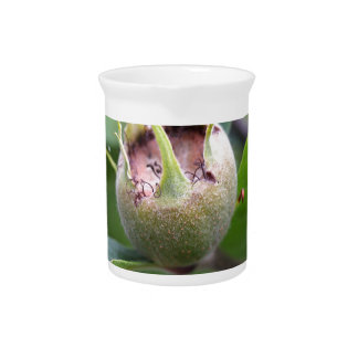 Fruit of the common medlar beverage pitcher