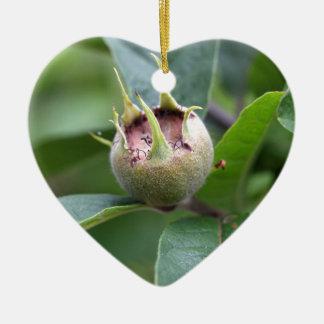 Fruit of the common medlar ceramic ornament