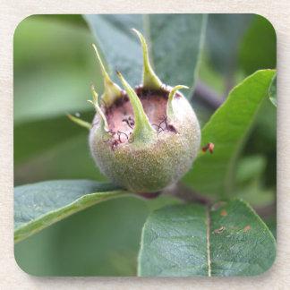 Fruit of the common medlar coaster