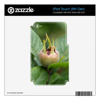 Fruit of the common medlar decal for iPod touch 4G