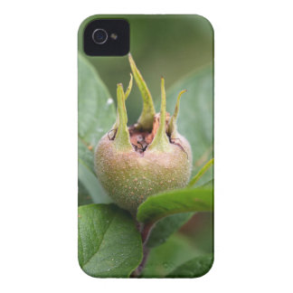 Fruit of the common medlar iPhone 4 Case-Mate case