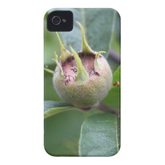 Fruit of the common medlar iPhone 4 cover
