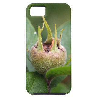 Fruit of the common medlar iPhone SE/5/5s case