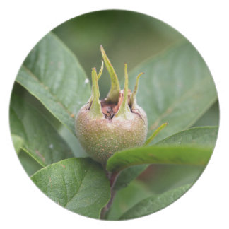 Fruit of the common medlar melamine plate