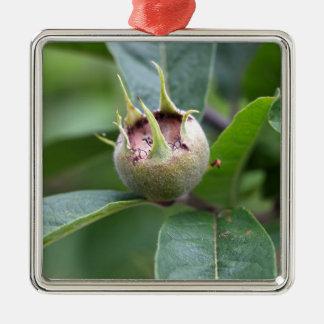 Fruit of the common medlar metal ornament