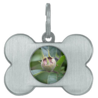 Fruit of the common medlar pet ID tag