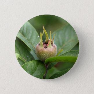 Fruit of the common medlar pinback button