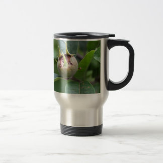 Fruit of the common medlar travel mug