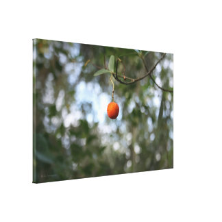 Fruit of the tree of madroño in the mountain range canvas print