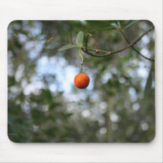 Fruit of the tree of madroño in the mountain range
