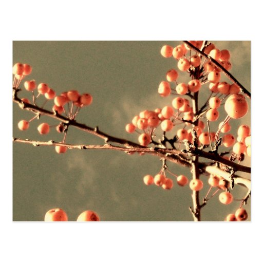 Fruit on Branch Postcard