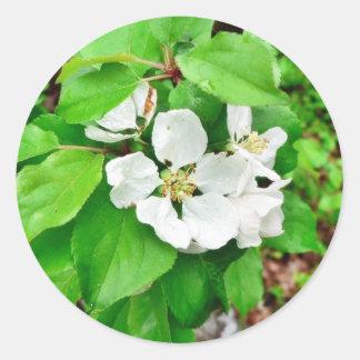Fruit Tree Flower Classic Round Sticker