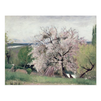 Fruit Tree in Blossom, Bois-le-Roi Postcard