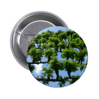 Fruit Trees at Erddig Hall Pinback Button