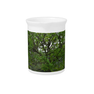 Fruit trees with green leaves in spring beverage pitcher