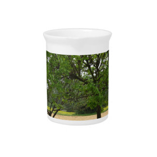 Fruit trees with green leaves in spring drink pitcher