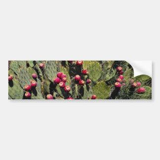 Fruited prickly pear cactus, Sonoran Desert Bumper Stickers