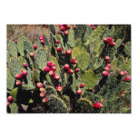 Fruited prickly pear cactus, Sonoran Desert 5x7 Paper Invitation Card