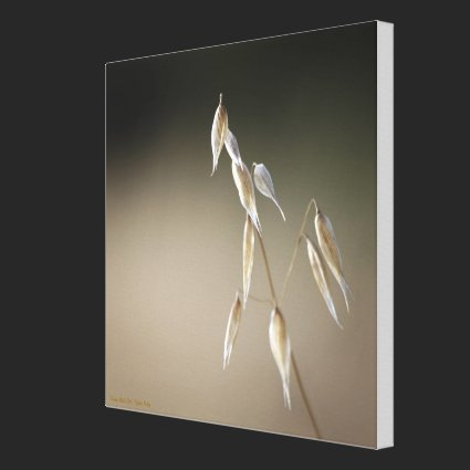 Fruiting Wiild Oat Gallery Wrapped Canvas