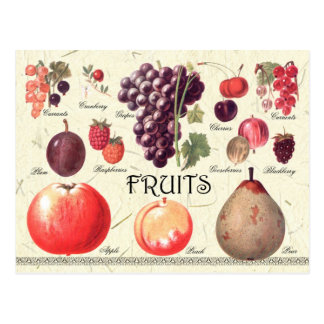 Fruits Illustration Postcard