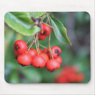 fruits in the fall, red berries mouse pad