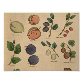 Fruits & Leaves Poster