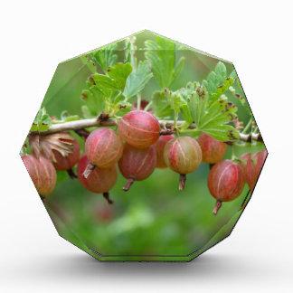 Fruits of a gooseberry award