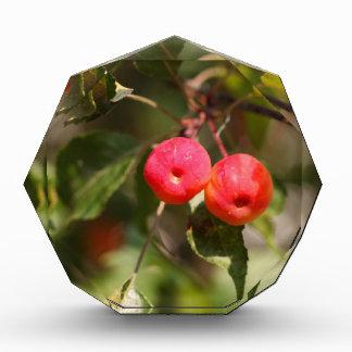 Fruits of a wild apple tree acrylic award