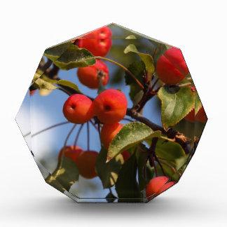 Fruits of a wild apple tree award