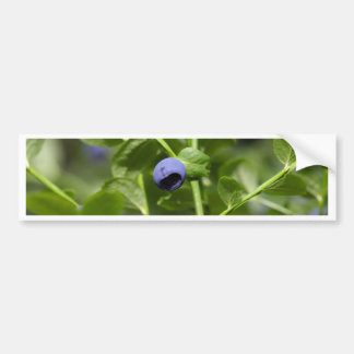 Fruits of the European blueberry Bumper Sticker