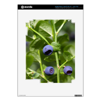 Fruits of the European blueberry iPad 3 Skin