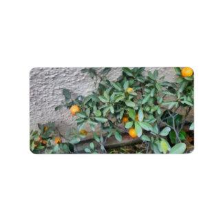 Fruits of the Mandarin Orange plant in the garden Address Label