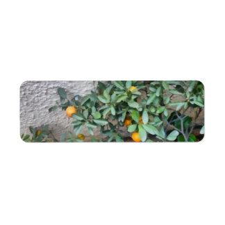 Fruits of the Mandarin Orange plant in the garden Return Address Label