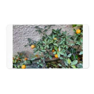 Fruits of the Mandarin Orange plant in the garden Shipping Label